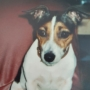 Tolkconsult dierbare overleden hond